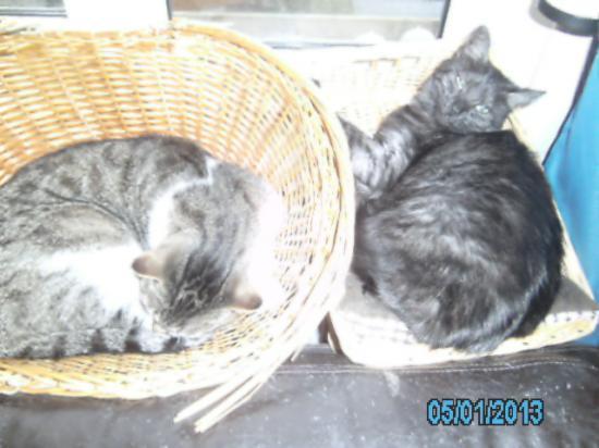 05.01.2013 Grizou et Titite