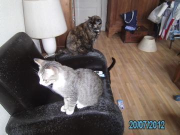 20-07-2012-pict0329.jpg